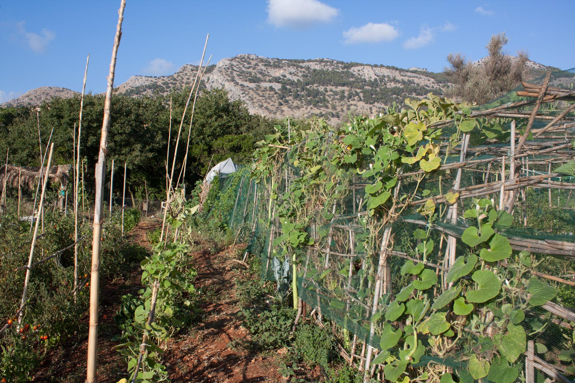 gli-appezzamenti-coltivati-al-codifas