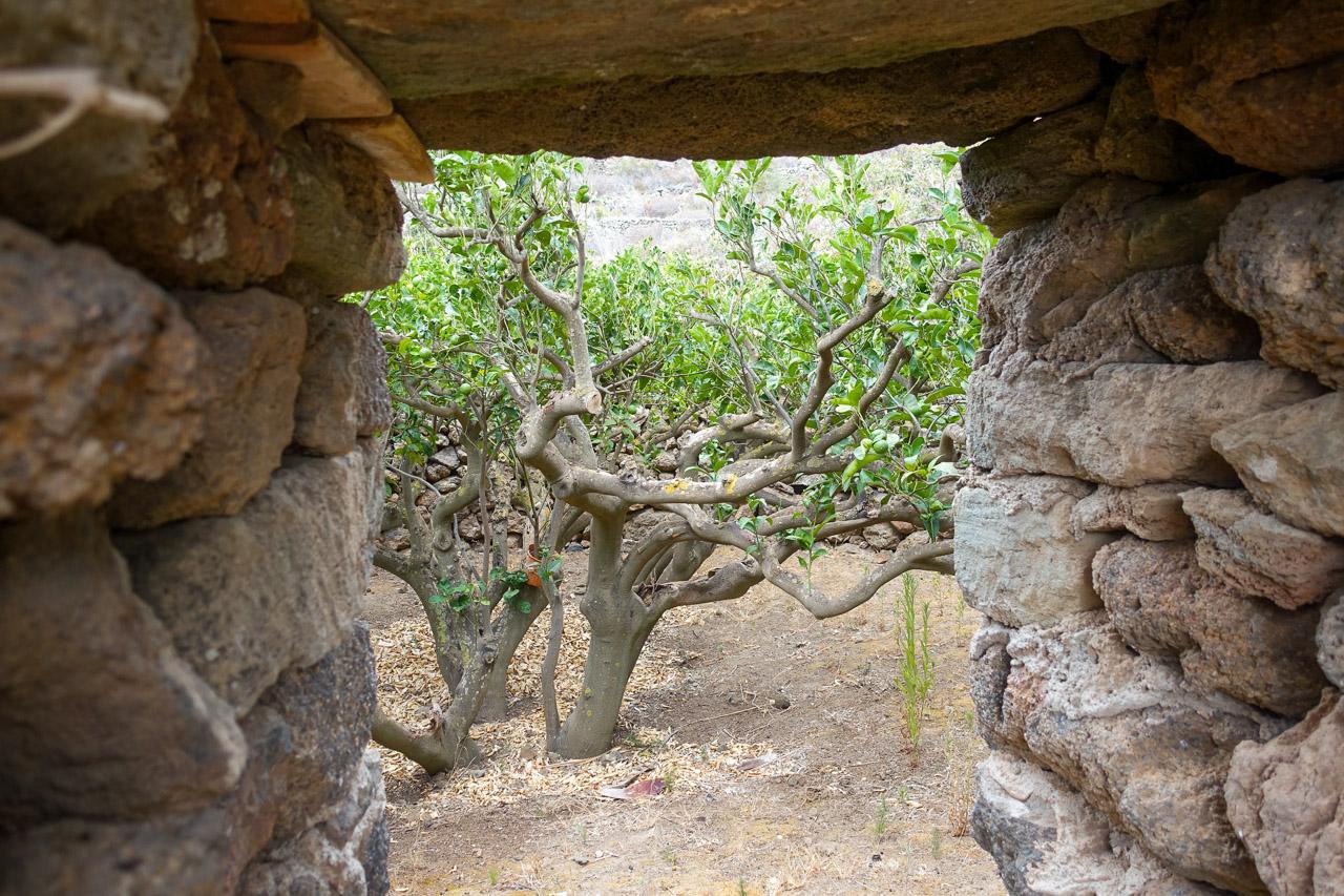 ingresso di un giardino pantesco