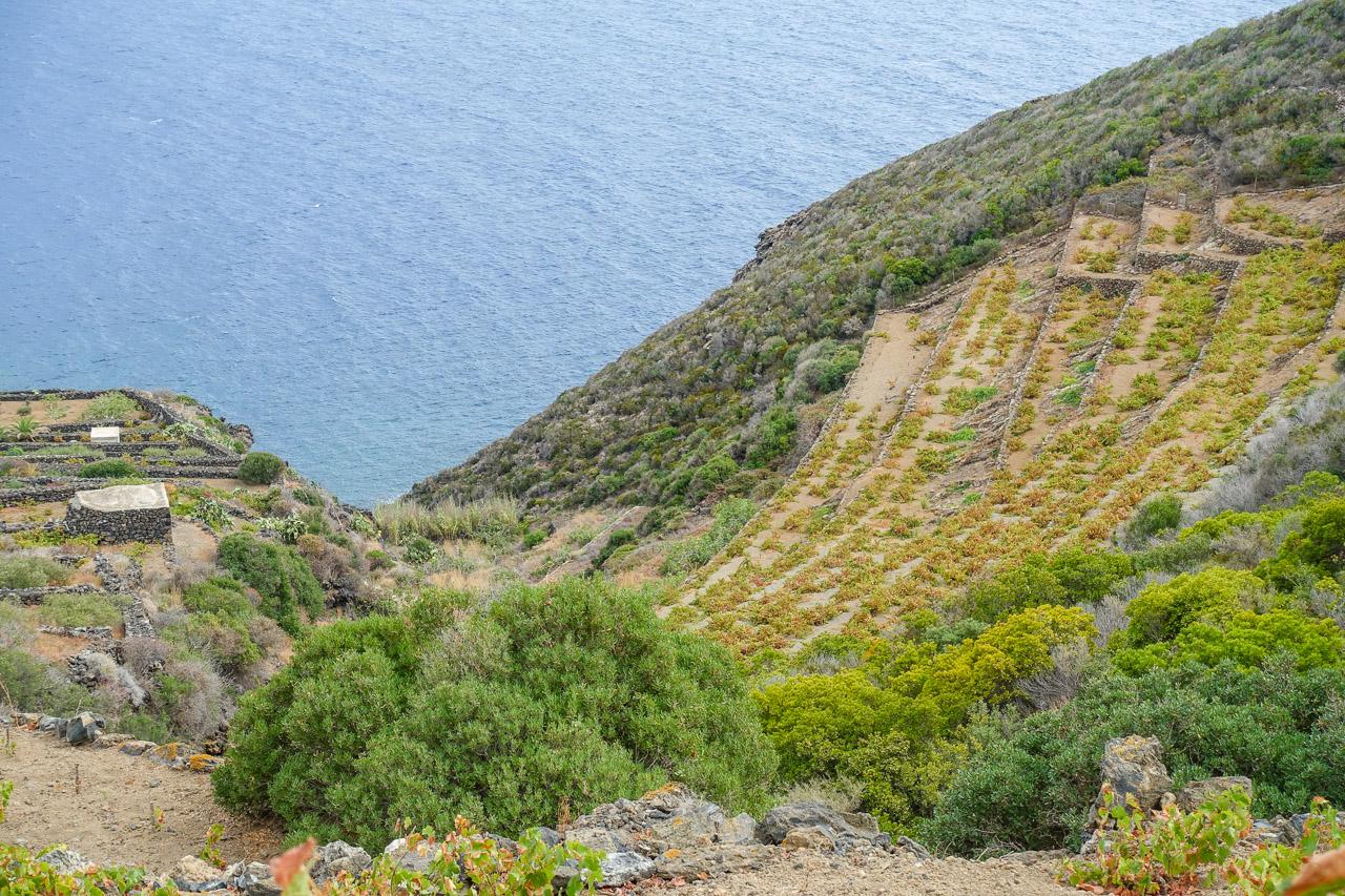 terrazzamenti e vigne che guardano il mare